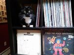 Black Cat Records and More