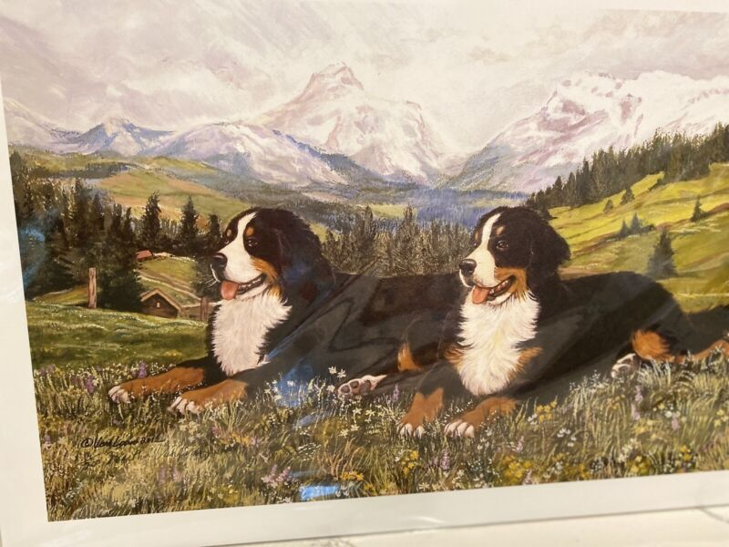 bernese mountain dog Pair Lying In Alps Ltd Ed 11x14 Print By Van Loan