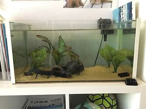 2ft tank Mitcham Whitehorse Area Preview