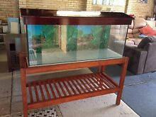 4 foot fish tank and stand with all accessories Bray Park Pine Rivers Area Preview