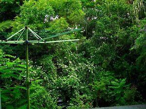 Quiet Studio Appt in Rainforest Garden Highgate Hill Brisbane South West Preview