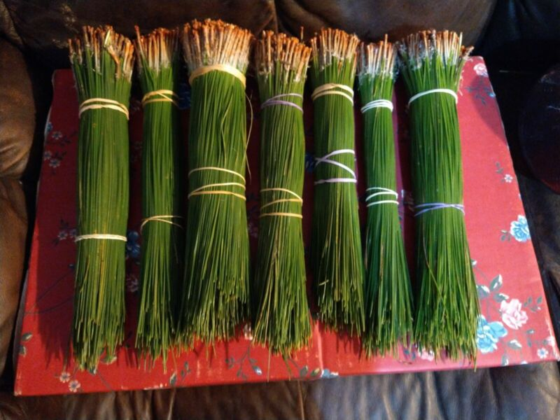 LONG LEAF PINE NEEDLES 3 LBS 6 OZ  12 TO 10 INCHES