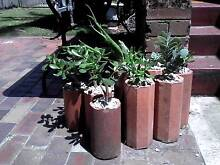 Mixed Succulents in Terracotta Pipes $3 Per POT. Wollongong 2500 Wollongong Area Preview