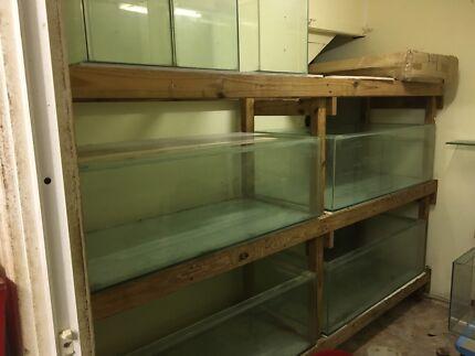 Fish Tank Breeding Set up