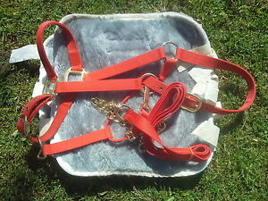 licou et lead chain neuf rouge