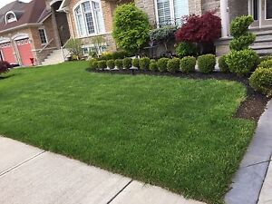 Grass cutting starting at only $30!!!