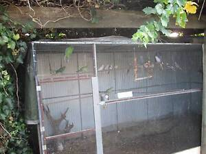big aviary plus birds selling as whole Morphett Vale Morphett Vale Area Preview
