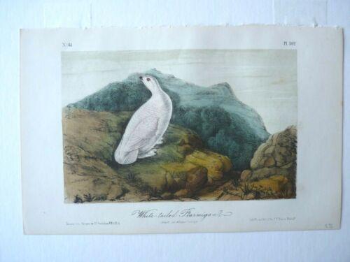 White-Tailed Ptarmigan Audubon Color Print 1850s Octavo Edition Plate #302