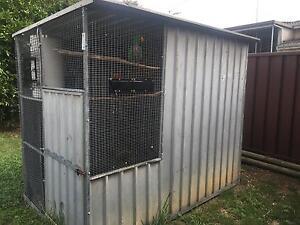 Breeding pair of Eclectus parrots Colyton Penrith Area Preview