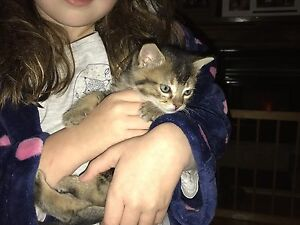 Kittens free to good homes Narromine Narromine Area Preview