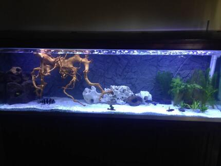 Kyle's Aquarium cleaning and maintenance