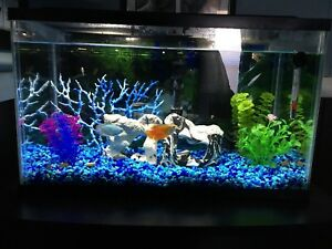 10g fish tank for sale with fish and everything you need!