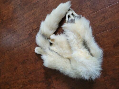 White Arctic Marble Fox Pelt Hide Fur Fort Hall Indian Reservation Blackfoot