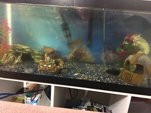 20 gallon tank including fish and all accessories