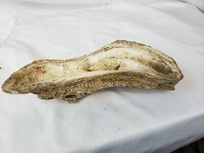 Large unusual fossil ? #2