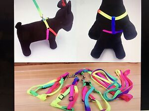 Extra small dog Harness Bankstown Bankstown Area Preview