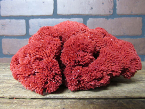 """Natural Genuine RED PIPE ORGAN Coral Home Decor 3.5""""x5""""x7""""  RP-108"""