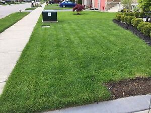 Grass cutting starting at only $30 !!