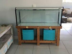 Fish tank Warana Maroochydore Area Preview