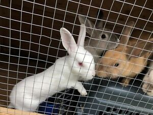 Rabbits For Good home