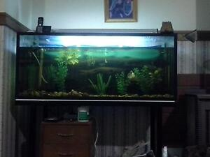 4ft fish tank Wingham Greater Taree Area Preview