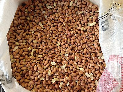 25Kg Peanuts for Wild Birds - Aflatoxin Tested Safe Wild Bird Food