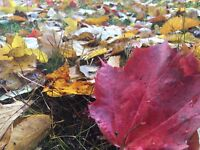 LEAF REMOVAL + OTHER FALL CLEAN UP SERVICES