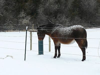 Horse Cattle Waterer The Watering Post Frost Proof Simple Sanitary 78 Inch.