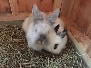 Affordable Bunny Sitting!