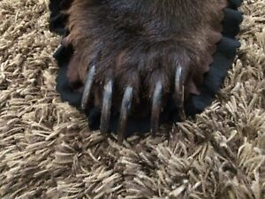 Grizzly Rug for sale