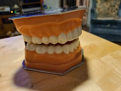 Vintage Pro-phy-lac-tic Brush Company Dental Mouth Model.