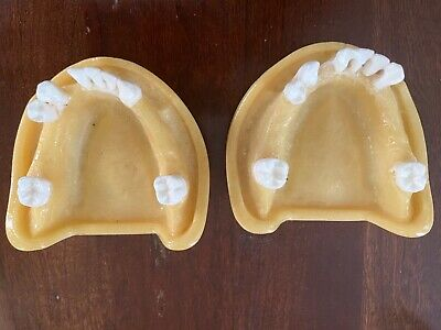 Dental Full Lower Arch Training Model- Implant Placement