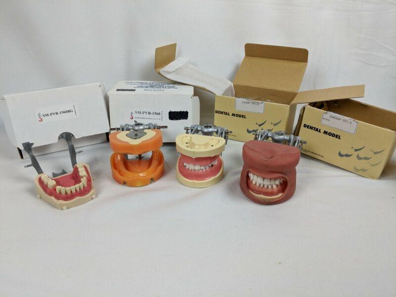 Dental Typodont Model Kilgore Nissin 200 Type Removable Teeth Columbia Lot