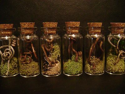 VIAL OF VINES LOT glass bottles DRIED FLOWERS halloween crafts miniature jars - Halloween Craft Jars