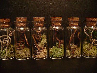 VIAL OF VINES LOT glass bottles DRIED FLOWERS halloween crafts miniature jars - Halloween Jars Crafts