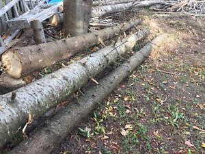 Free Lots of fire wood