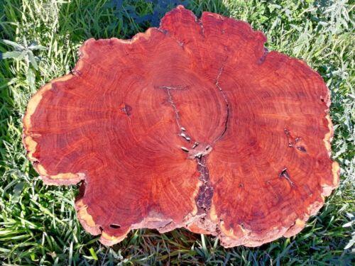 Mesquite Burl   {24 lb 3 oz} 29