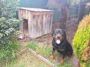 Dog house for sale Noble Park Greater Dandenong Preview