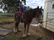 Wanted pony for two keen little riders Kojonup Pallinup Area Preview