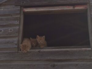 Kittens : ready to go