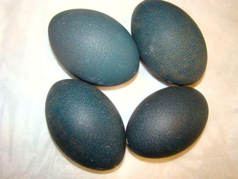 EMU Eggs four each