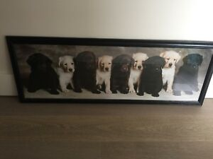 Puppy Framed Pic