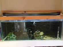 4ft aquarium plus extras Wamberal Gosford Area Preview