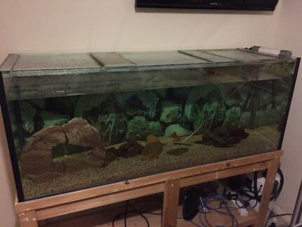 5 foot fish tank and stand Albany Creek Brisbane North East Preview
