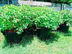 Bulk Plants