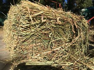 Certified Organic Hay for sale