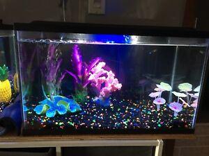 Two 10Gallon fish tanks, one 8.5 gallon and one 2.5 gallon