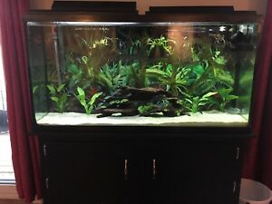 65 Gallon Running Tank comes with everything.
