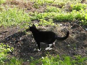 Free indoor/outdoor cat to good home Pakenham Cardinia Area Preview