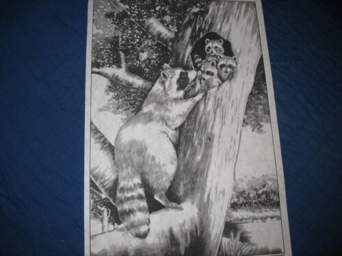 * TRI CHEM 7214 RACCOONS IN A TREE Picture to paint TRICHEM